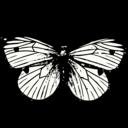 Synexdra